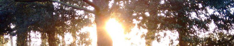 cropped-winter-sunshine-in-park-1.jpg