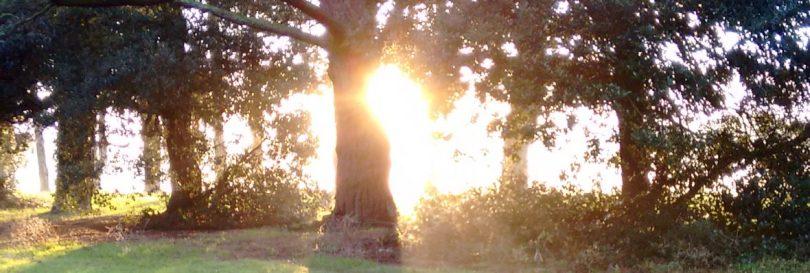 cropped-winter-sunshine-in-park-11.jpg