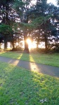 winter sunshine in park 1